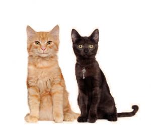Effetti collaterali - contraindicazioni - fa male - Happy Pet
