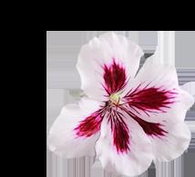 WondaLips - commenti - erboristeria - come si usa - composizione - ingredienti