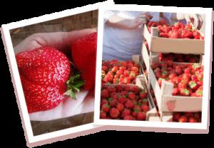 Home Berry Box - Effetti collaterali - fa male - contraindicazioni