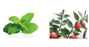 Livariz - commenti - come si usa - composizione - ingredienti - erboristeria