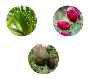 Italia - funziona - recensioni - forum - opinioni - chi l'ha provato - Aloe PhytoComplex