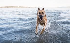 Good Doggie - farmacie - prezzo - dove si compra - Amazon - Aliexpress